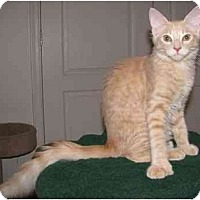 Adopt A Pet :: Gobi - Mesa, AZ