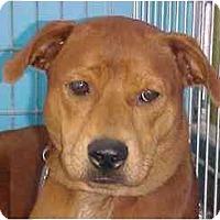 Adopt A Pet :: Autumn - Kingwood, TX