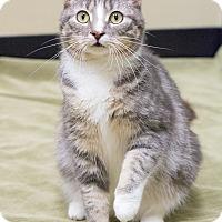 Adopt A Pet :: Caiti - Chicago, IL