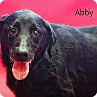 Adopt A Pet :: Abby - Cedar Rapids, IA
