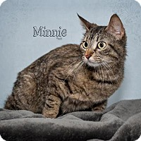 Domestic Mediumhair Cat for adoption in Fort Mill, South Carolina - Minnie 5389