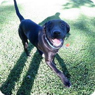 Labrador Retriever Mix Dog for adoption in Janesville, Wisconsin - Larry