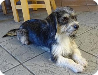 Terrier (Unknown Type, Small) Mix Dog for adoption in Lathrop, California - Gracie