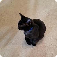 Adopt A Pet :: Columbus - Geneseo, IL