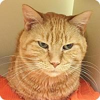 Adopt A Pet :: Otis (HOSPICE NEEDED) - Salisbury, MA
