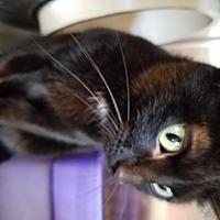 Adopt A Pet :: Sienna - Geneseo, IL