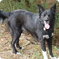 Adopt A Pet :: Charlie - Oliver Springs, TN