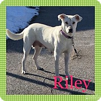 Adopt A Pet :: Riley - New Oxford, PA