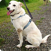Adopt A Pet :: Rue - Pleasant Grove, CA