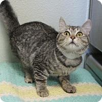 Adopt A Pet :: Tulip - Libby, MT