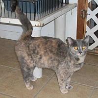 Adopt A Pet :: Penny - Lacon, IL