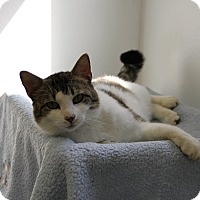 Adopt A Pet :: Bennet - Greensboro, NC