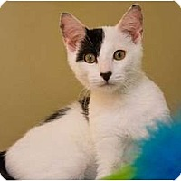 Adopt A Pet :: Petey (KL) - Little Falls, NJ