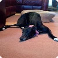 Adopt A Pet :: Isla - Knoxville, TN