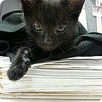 Adopt A Pet :: Coal - Pittstown, NJ