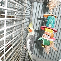 Adopt A Pet :: Deago - Neenah, WI