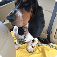 Adopt A Pet :: Dudley - Northport, AL