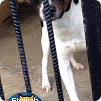 Adopt A Pet :: Randy - Boston, MA