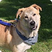 Shepherd (Unknown Type) Mix Dog for adoption in Canastota, New York - Daryl