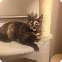 Adopt A Pet :: Alura - Dale City, VA