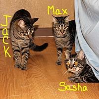 Adopt A Pet :: Jack - Jesup, GA