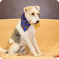 Adopt A Pet :: Tilly - Ile-Perrot, QC