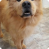 Adopt A Pet :: Rogue - Fennville, MI