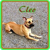 Adopt A Pet :: Cleo - Berkeley Springs, WV