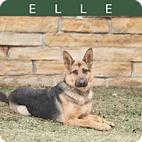Adopt A Pet :: ELLA - Toronto, ON