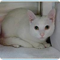 Adopt A Pet :: PAUL- available 3/29 - Marietta, GA