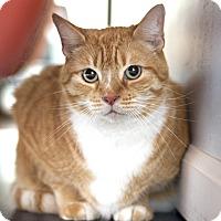 Adopt A Pet :: Toby - St Helena, CA