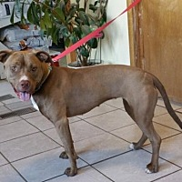 Adopt A Pet :: Willow-Nebraska- - Fulton, MO