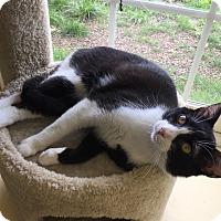 Adopt A Pet :: Cape - Newburgh, IN
