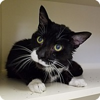 Adopt A Pet :: Uncle - Elyria, OH