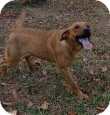 Labrador Retriever/Shepherd (Unknown Type) Mix Dog for adoption in Hagerstown, Maryland - Etta James-I'm in New England!