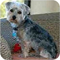 Adopt A Pet :: Betty Louise - Ft Myers, FL