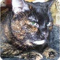 Adopt A Pet :: Margherita - Summerville, SC