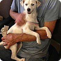 Adopt A Pet :: Siren - Encinitas, CA