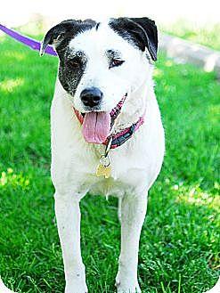 Pointer Mix Dog for adoption in Detroit, Michigan - Gentry aka Panda So Sweet!