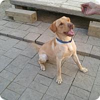 Adopt A Pet :: LEO - New Windsor, NY