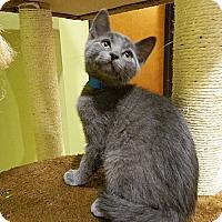 Adopt A Pet :: Bucky - The Colony, TX
