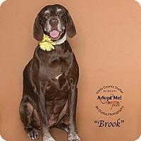 Adopt A Pet :: Brook - Vancouver, BC