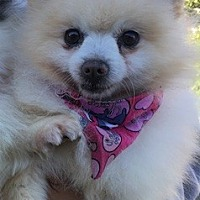 Adopt A Pet :: Puma - Temecula, CA