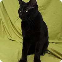 Adopt A Pet :: Santa - Hawk Point, MO