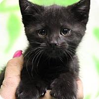 Adopt A Pet :: Bryne (Has Application) - Washington, DC