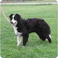 Adopt A Pet :: Maddie - Tiffin, OH