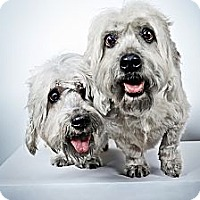 Adopt A Pet :: Ginger and Buster - New York, NY