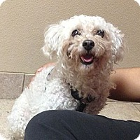 Adopt A Pet :: Marco - West New York, NJ