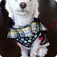 Adopt A Pet :: Twiggy - Toronto, ON