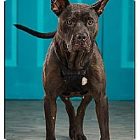 Adopt A Pet :: Cookie - Owensboro, KY